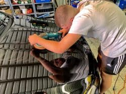 Paint Correction Courses Melbourne
